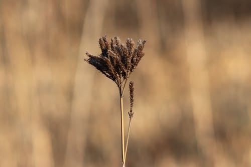 Free stock photo of brown, brown background, field