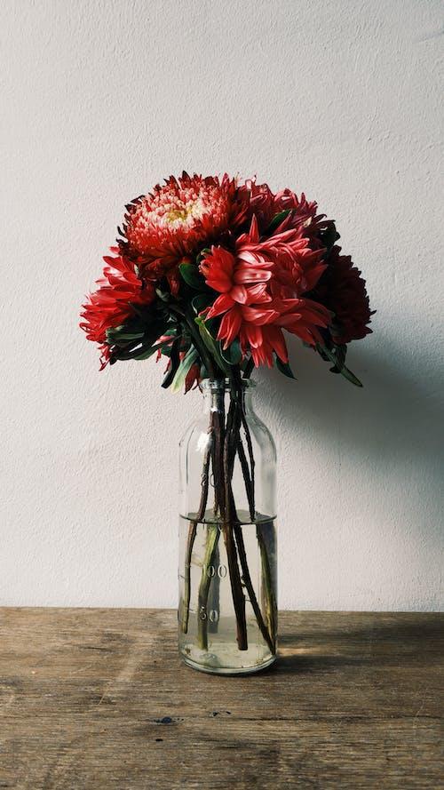 Darmowe zdjęcie z galerii z bukiet, dekoracja, flora