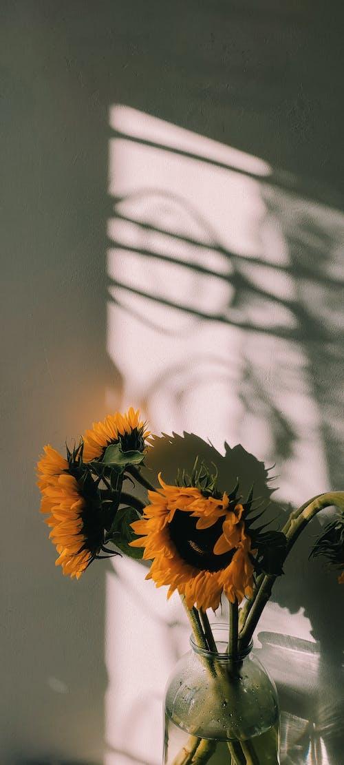 Darmowe zdjęcie z galerii z flora, kwiaty, pionowy strzał