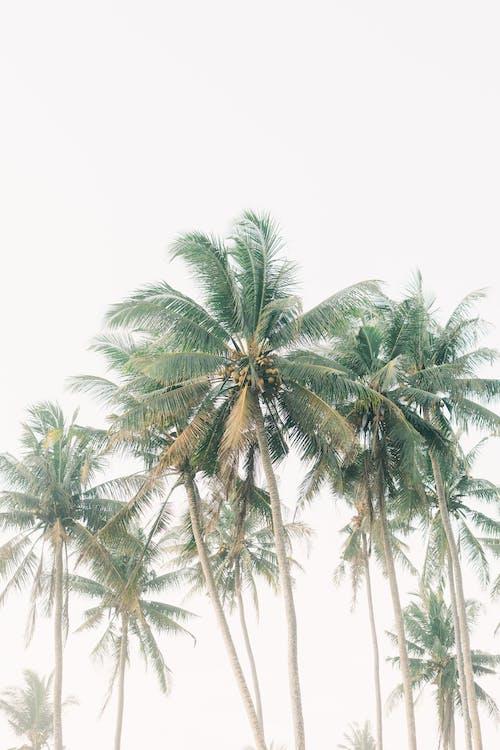 Foto profissional grátis de areia, árvore, beira-mar