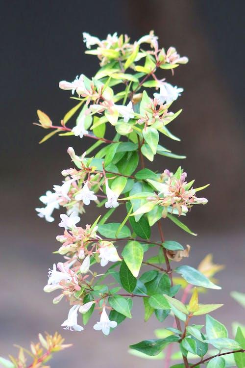 Free stock photo of flowers, garden, nature