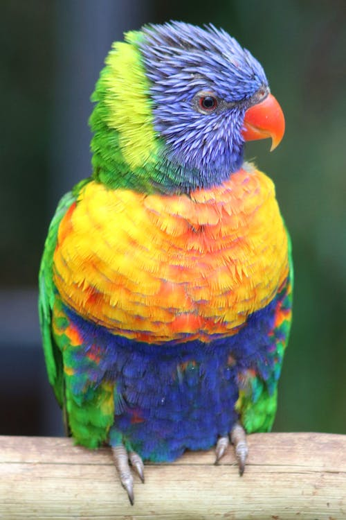 Free stock photo of bird, colorful, feathers