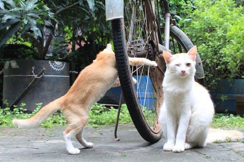 Foto d'estoc gratuïta de gat