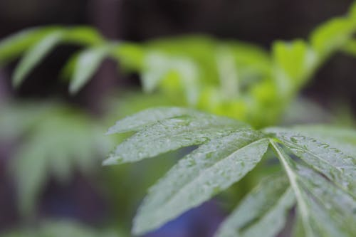 Foto d'estoc gratuïta de fulla verda