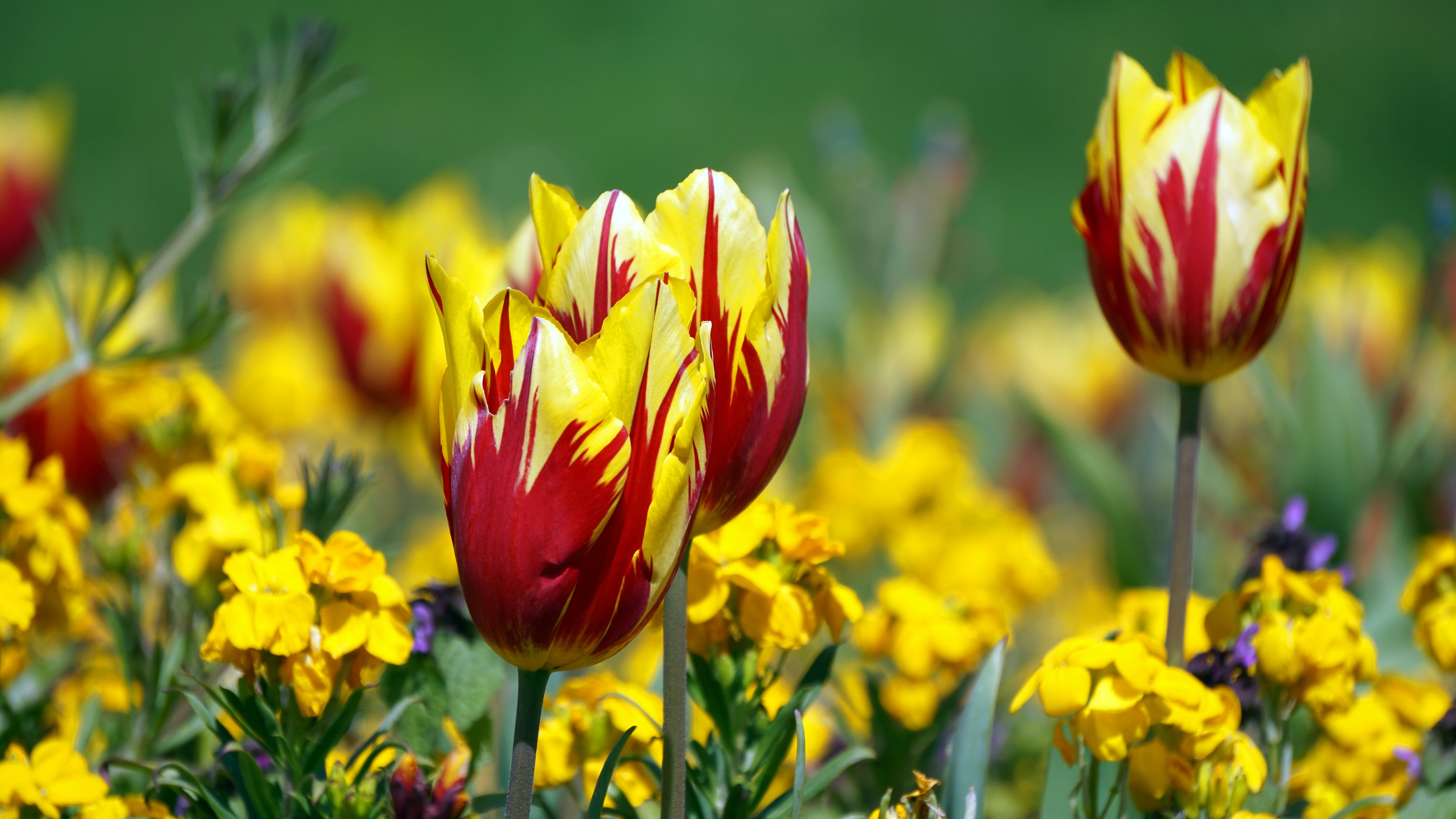 Red and Yellow Flowers during Daytime