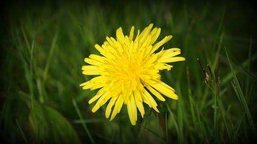 Ảnh lưu trữ miễn phí về cánh đồng, màu vàng