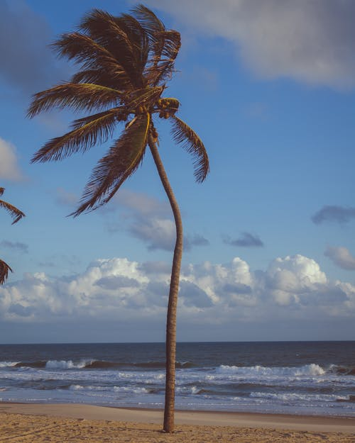 Coconut Palm Tree Near Sea