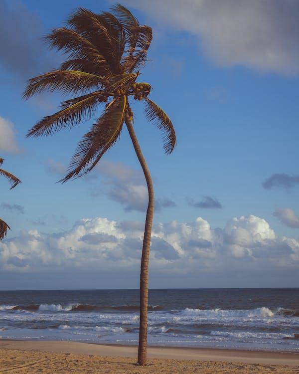Coconut Palm Tree Near Sea