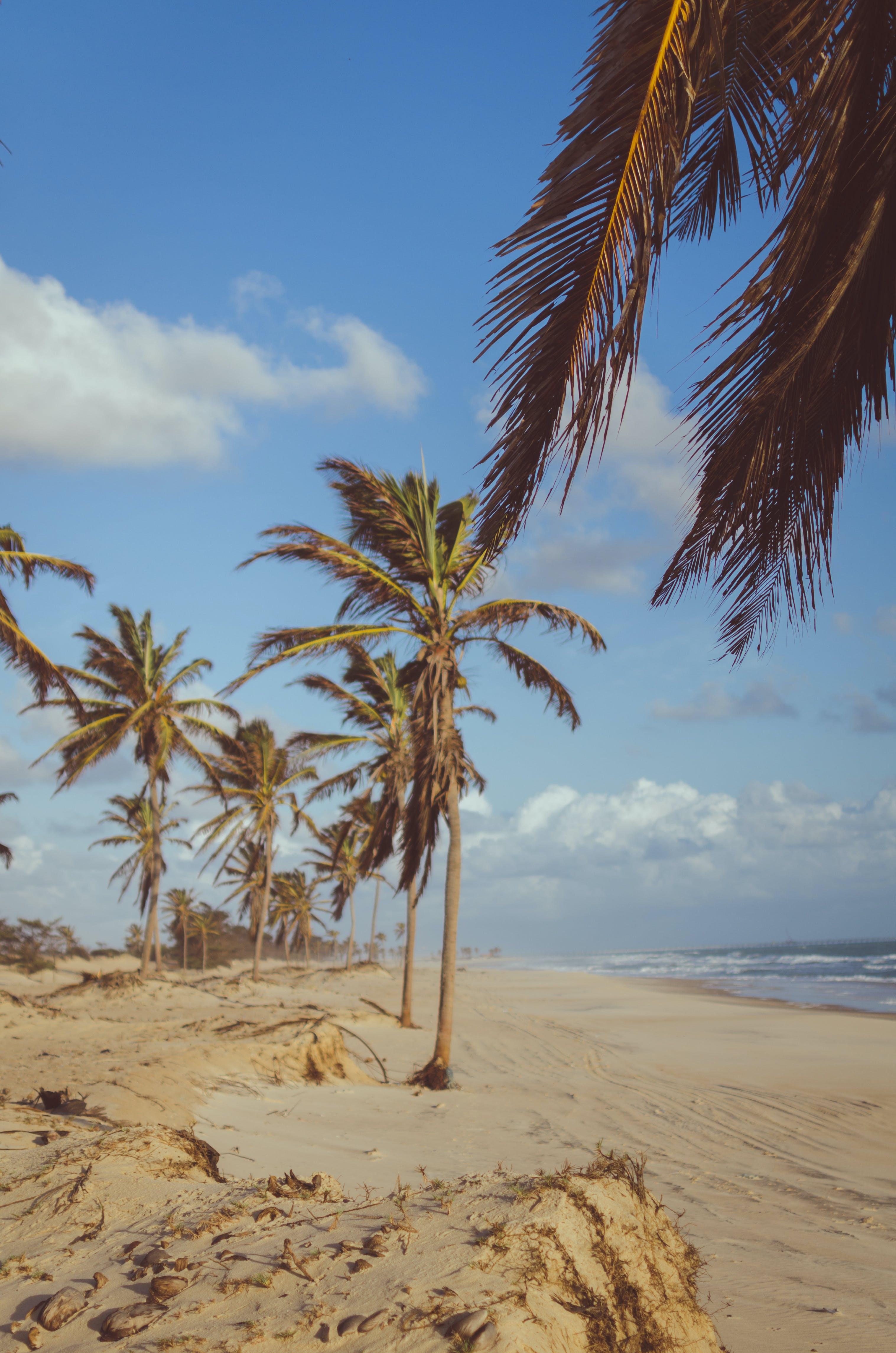 Coconut Tree Near Sea at Daytime
