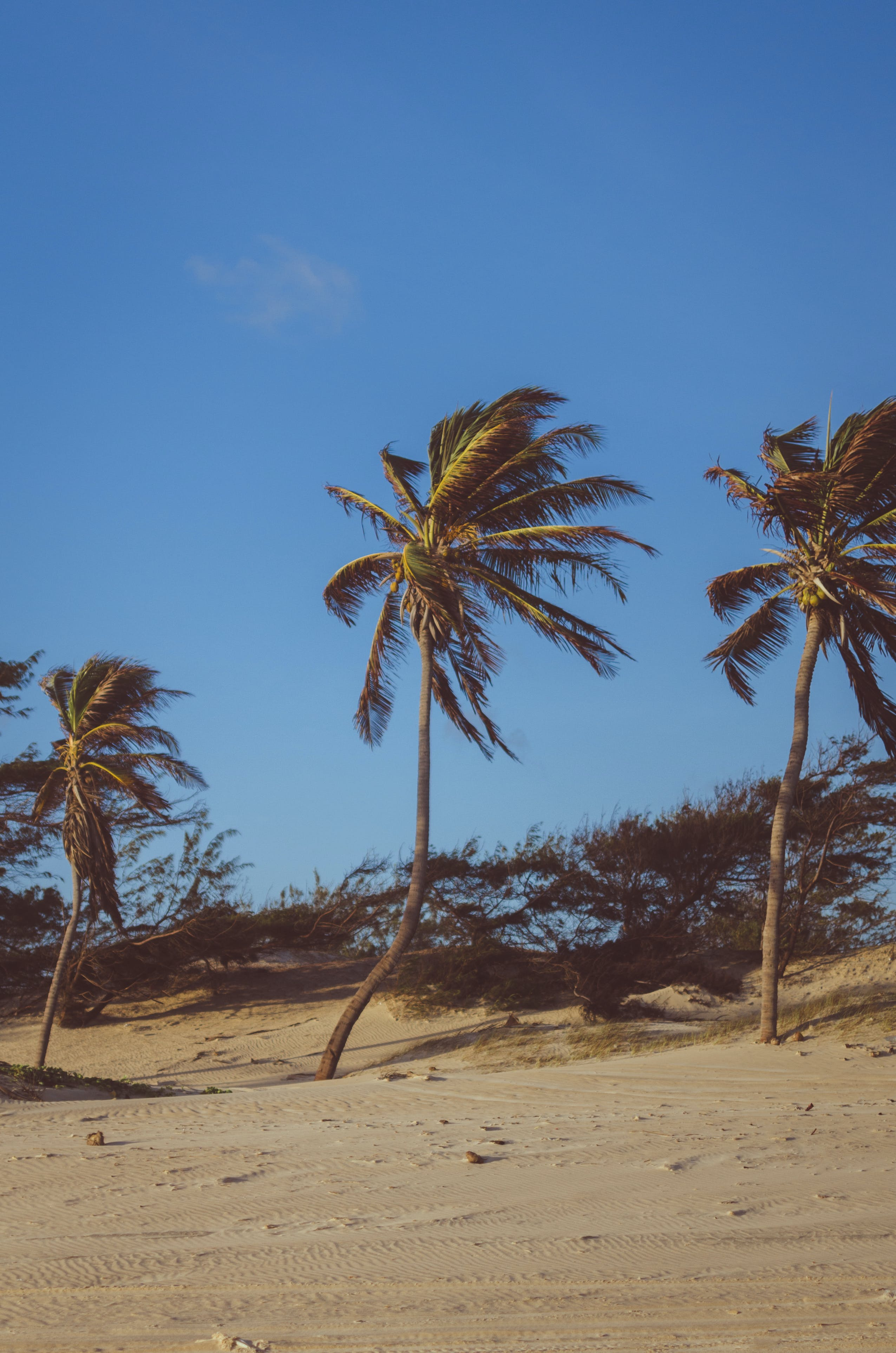 Coconut Trees on Brown Soil Under Blue Sky