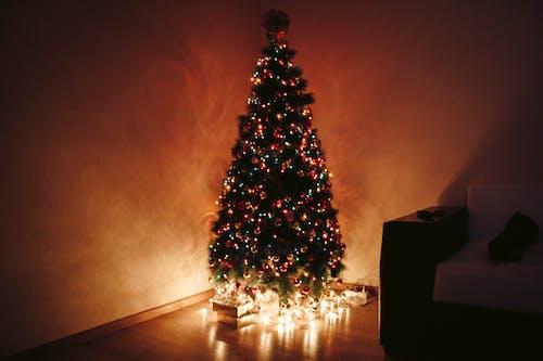 คลังภาพถ่ายฟรี ของ กลางคืน, คริสต์มาส, ต้นคริสต์มาส, ตอนเย็น