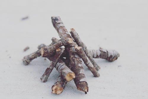 Gratis lagerfoto af arrangement, bark, bunke