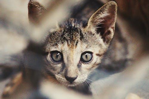 Kostenloses Stock Foto zu kätzchen, katze, katzenartig, säugetier
