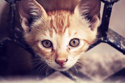 動物, 可愛, 可愛的, 寵物 的 免費圖庫相片