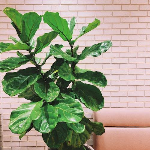 Green Plant Near Brown Wall