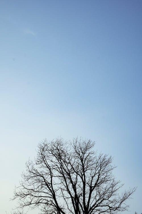 Gratis lagerfoto af abstrakt, alene, baggrund