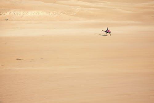 乾旱, 冒險, 動物, 反射 的 免费素材照片