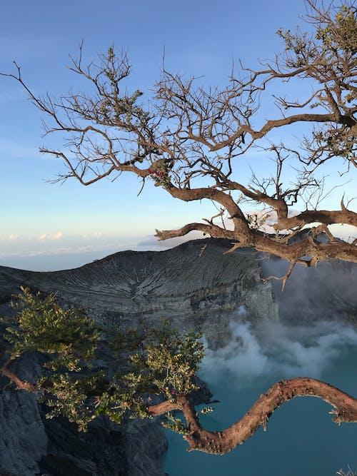 Bare Tree on Mountain