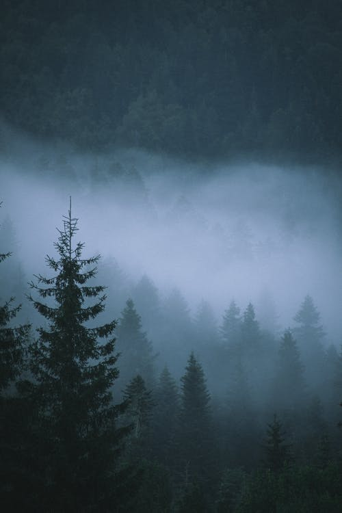 Forest View Under a Gloomy Weather