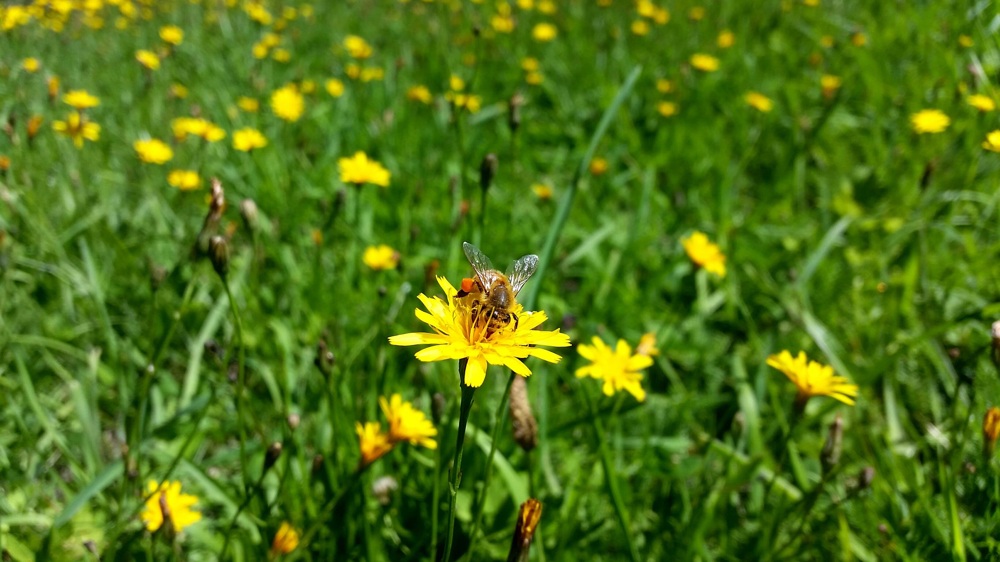 Free stock photo of bee, close, close up, close-up