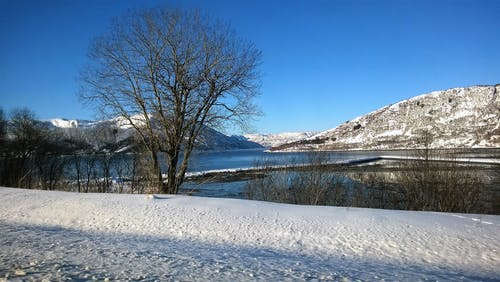 ağaçlar, buz, buz tutmuş, dağlar içeren Ücretsiz stok fotoğraf