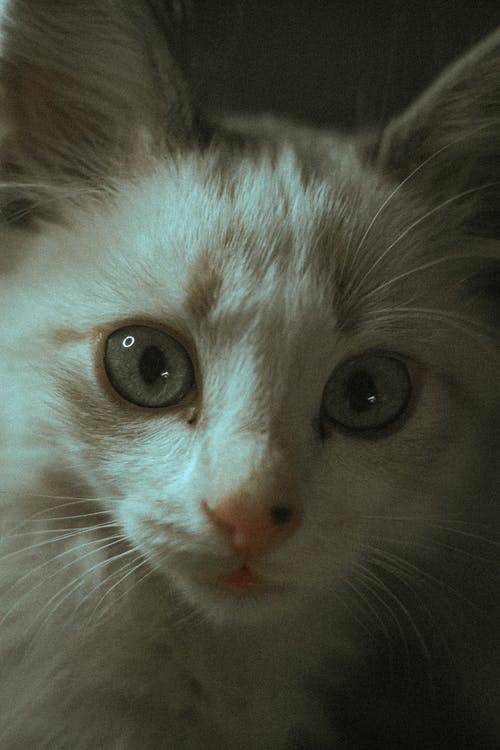 Close-up Photo of a Cat's Face