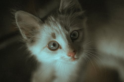 A Kitten in a Close-up Photography
