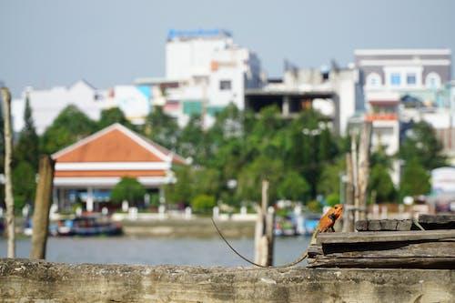 Безкоштовне стокове фото на тему «#city #mekong #delta #urban #nature #lizard»
