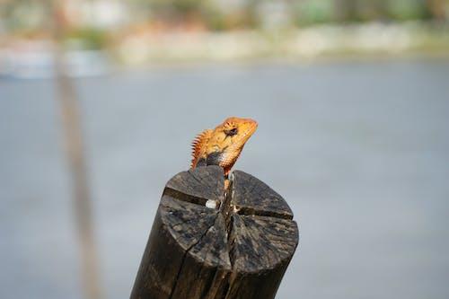 Безкоштовне стокове фото на тему «#lizard #city #mekong #delta #urban #nature»