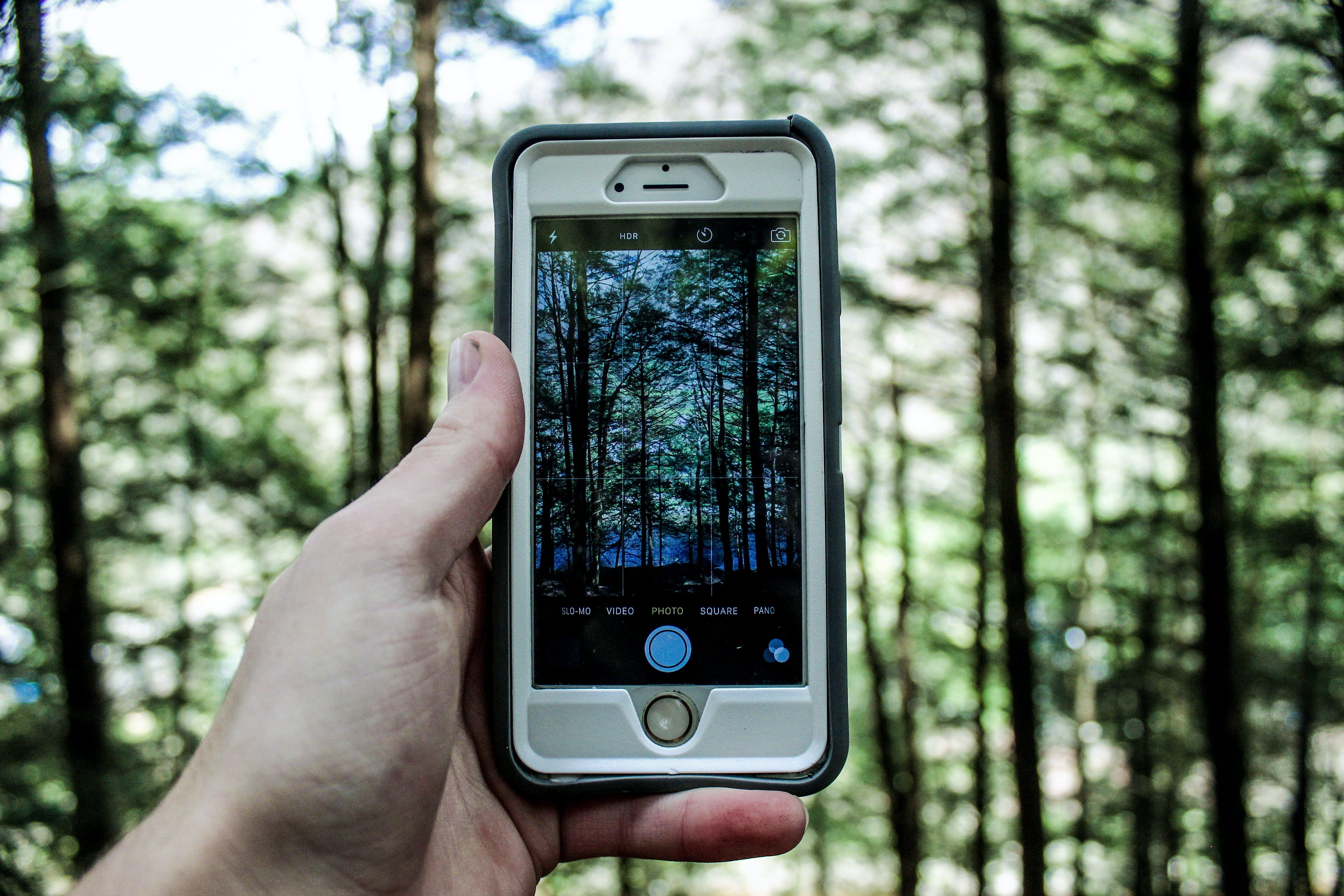Kostenloses Stock Foto zu bäume, foto machen, fotografie, hand