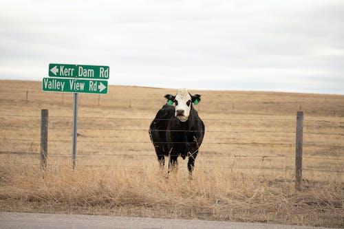 動物, 動物攝影, 家畜 的 免费素材图片