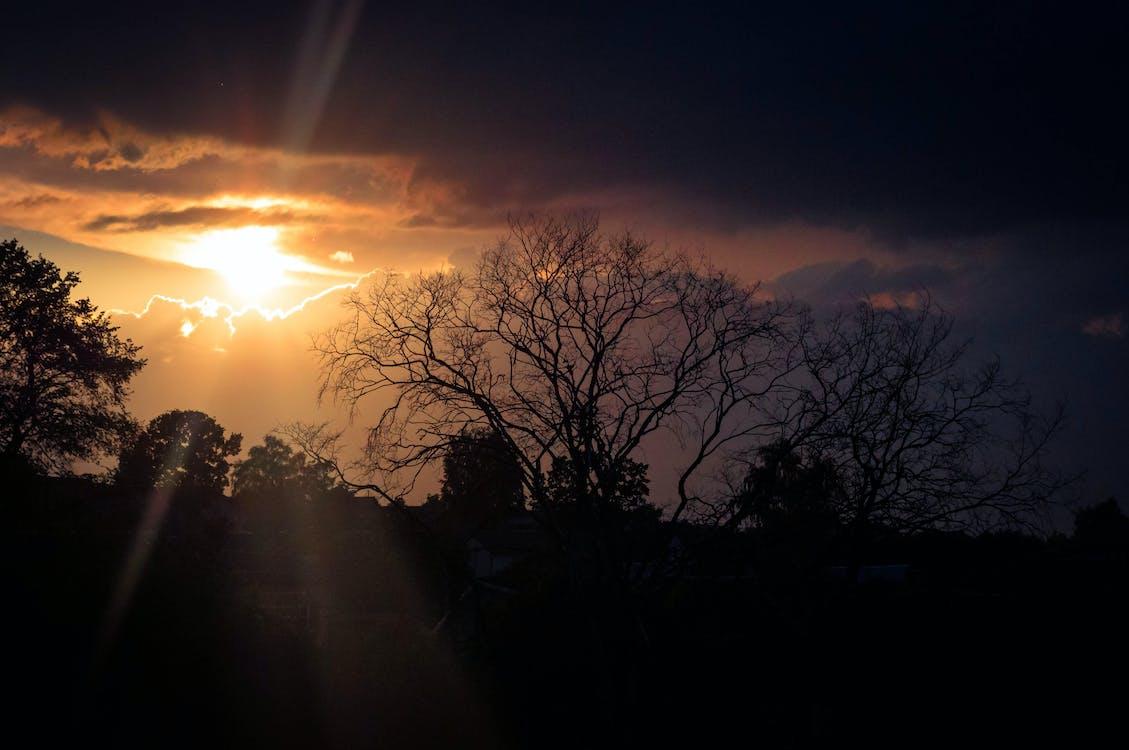 bakgrundsbelyst, gryning, himmel