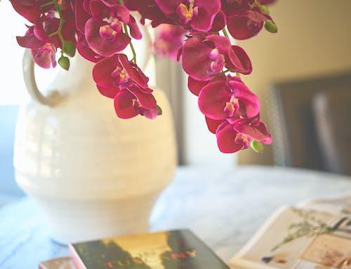 Foto d'estoc gratuïta de flors, gerro, gerro de flors, morat