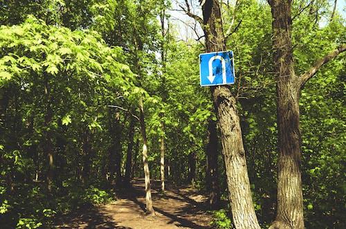 Foto stok gratis jalan hutan, tanda belok, tanda pembalikan