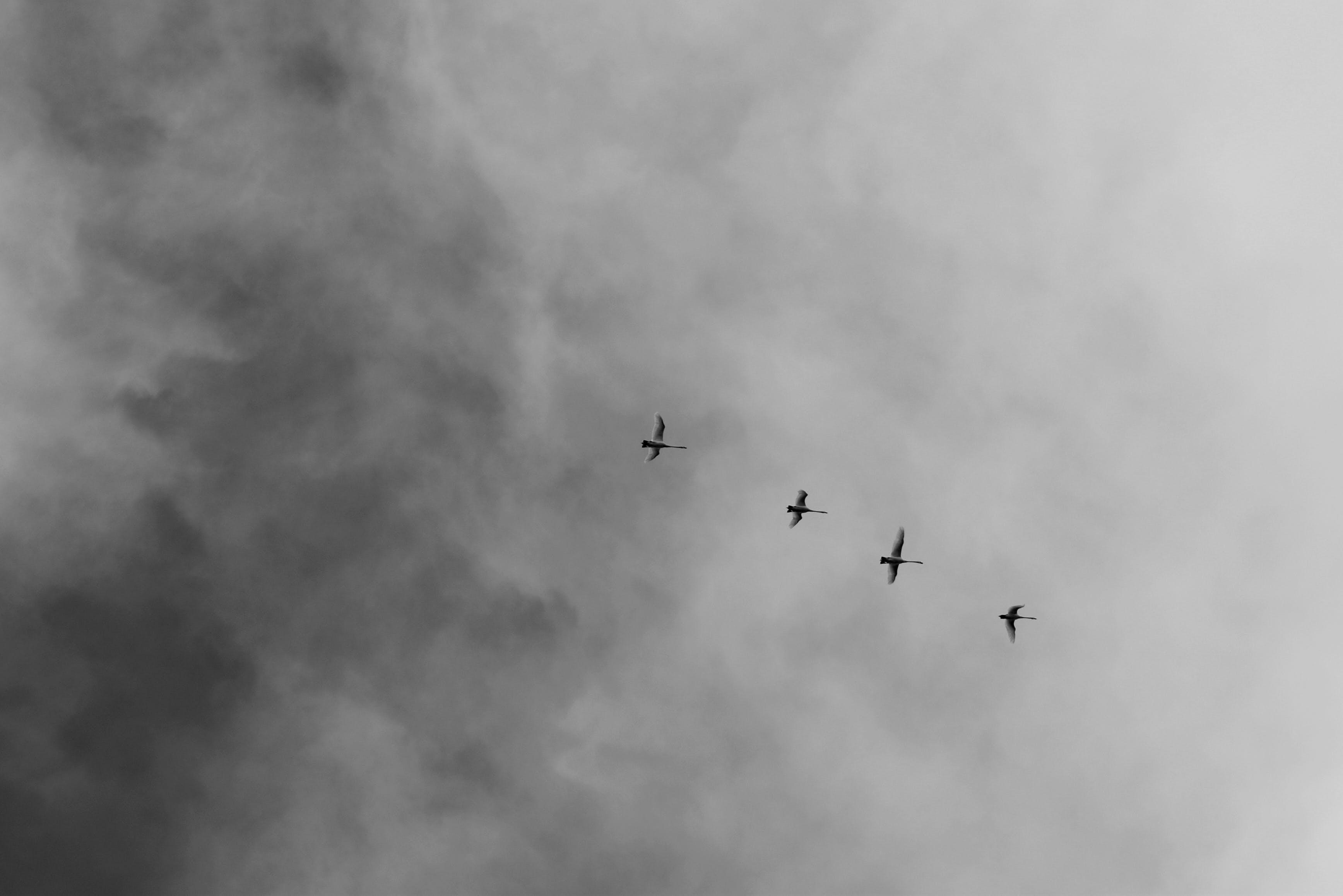aksiyon, bulutlar, dar açılı çekim, gökyüzü içeren Ücretsiz stok fotoğraf