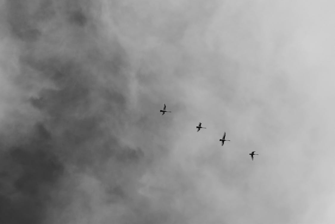 Low Angle Photography of Four Flying Birds