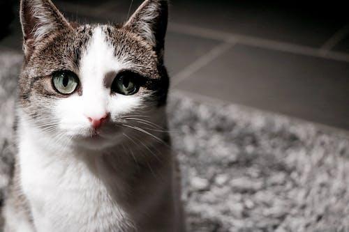 Základová fotografie zdarma na téma kočka, koťátko