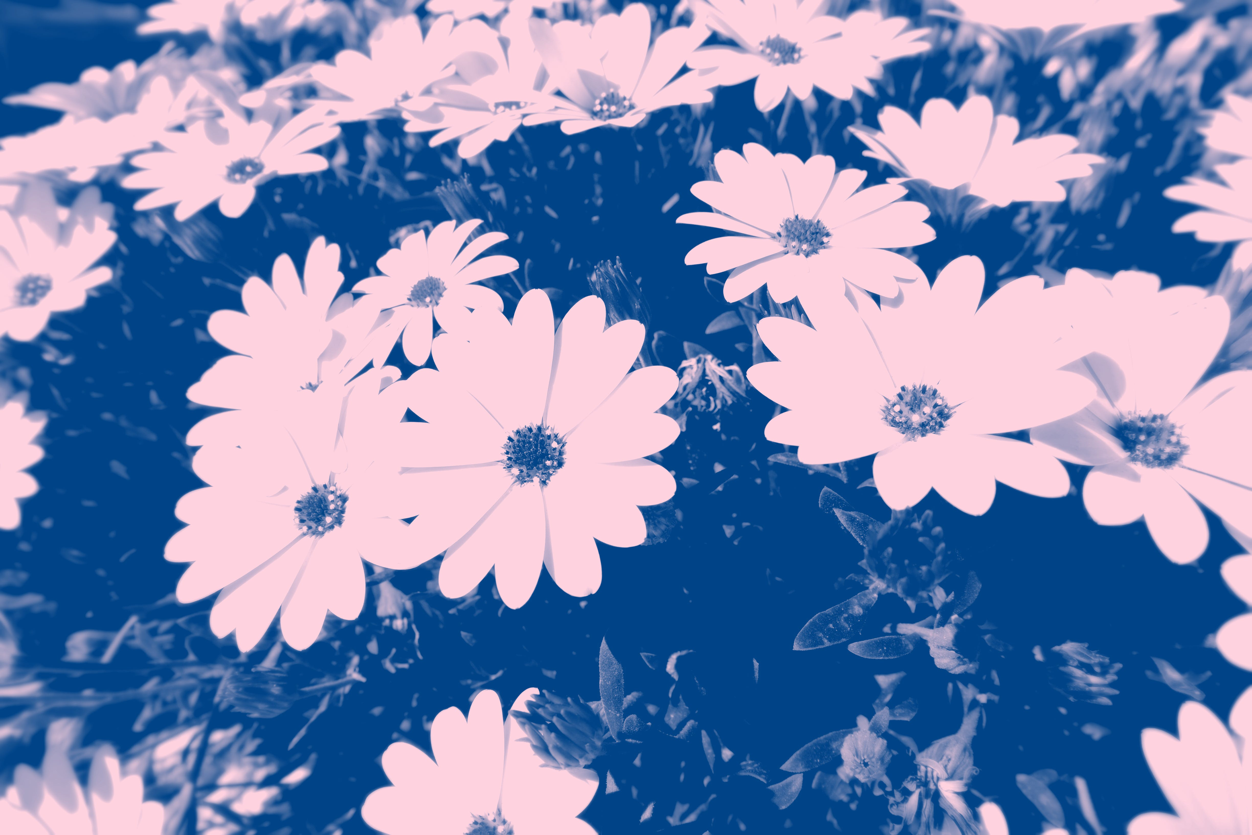 Blue Photo of Petaled Flowers