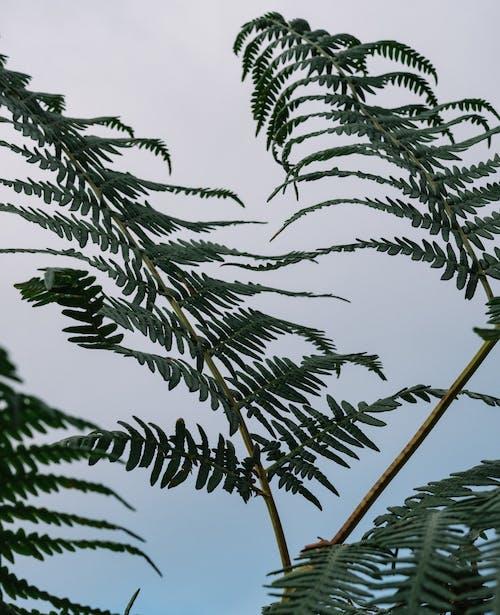 Foto stok gratis cabang, daun, daun palem
