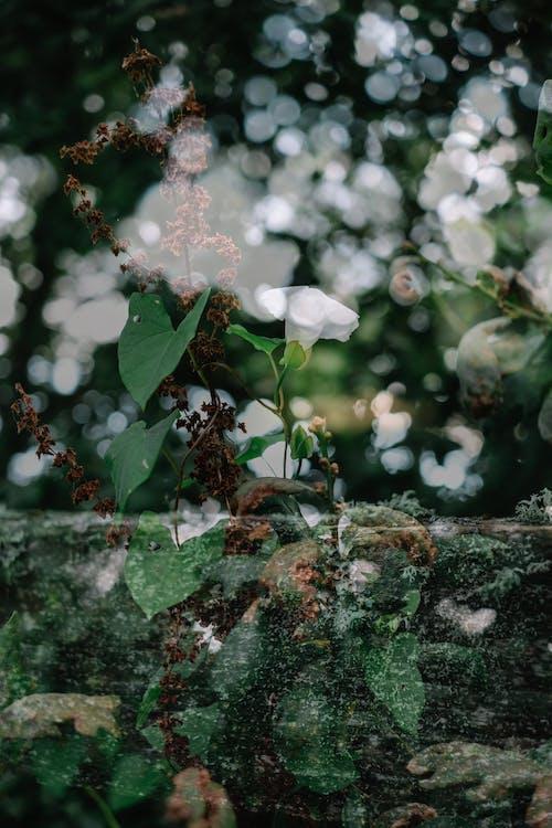 Základová fotografie zdarma na téma barva, břečťan, flóra