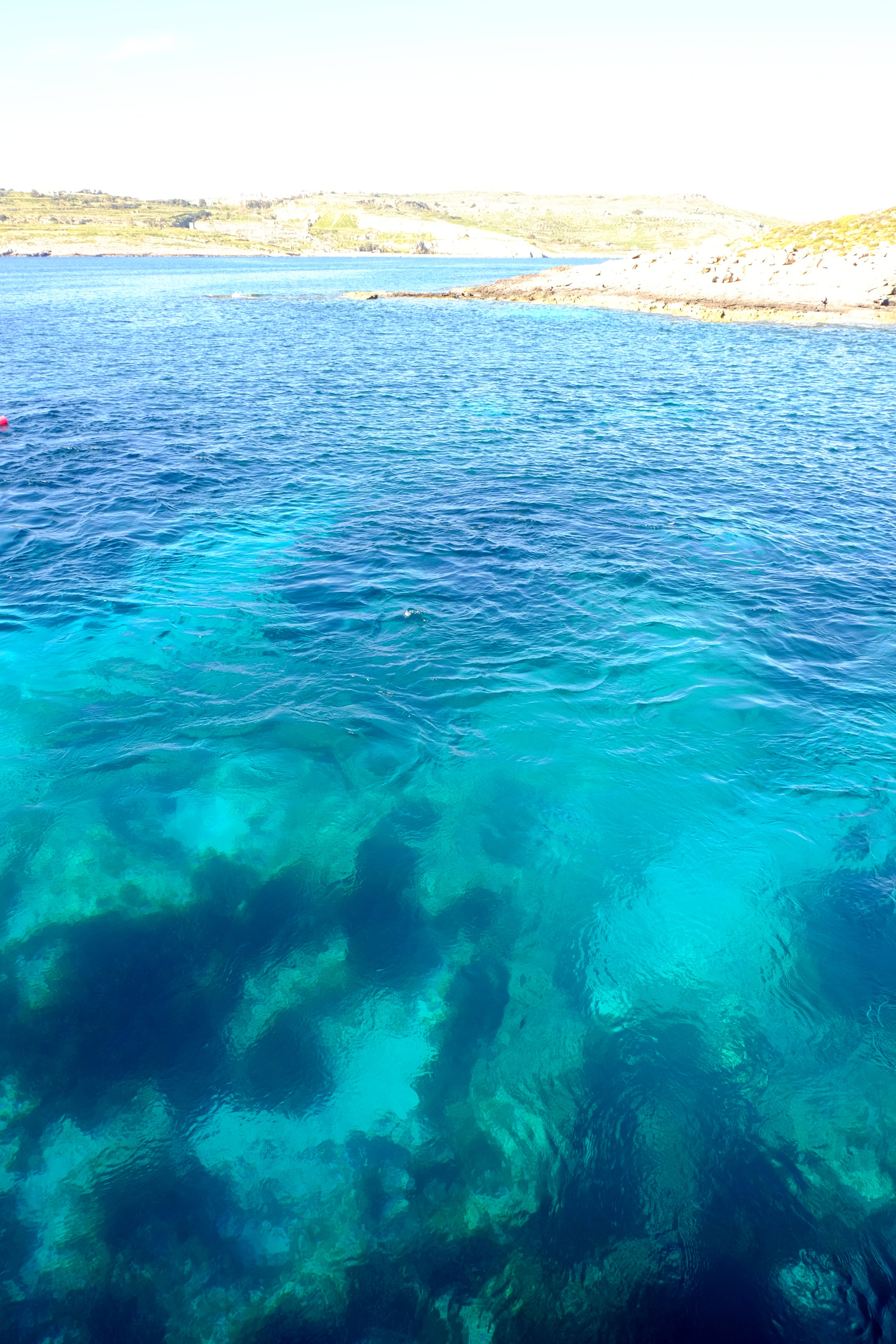 Free stock photo of blue, coral, cove, diving
