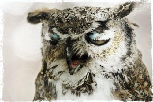 Безкоштовне стокове фото на тему «сова»