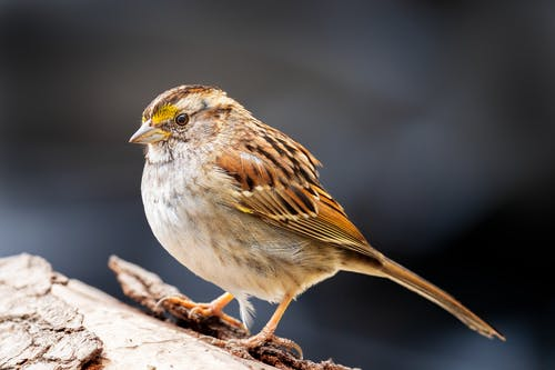 Close-up Photo of Perched Sparrow