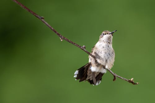 Brown and White Bird on a Tree Branch
