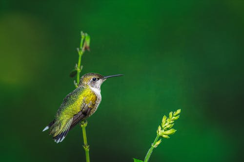 A Hummingbird Perched on a Plant