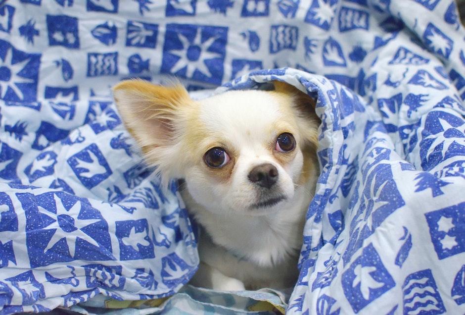 White and Beige Short Coat Dog