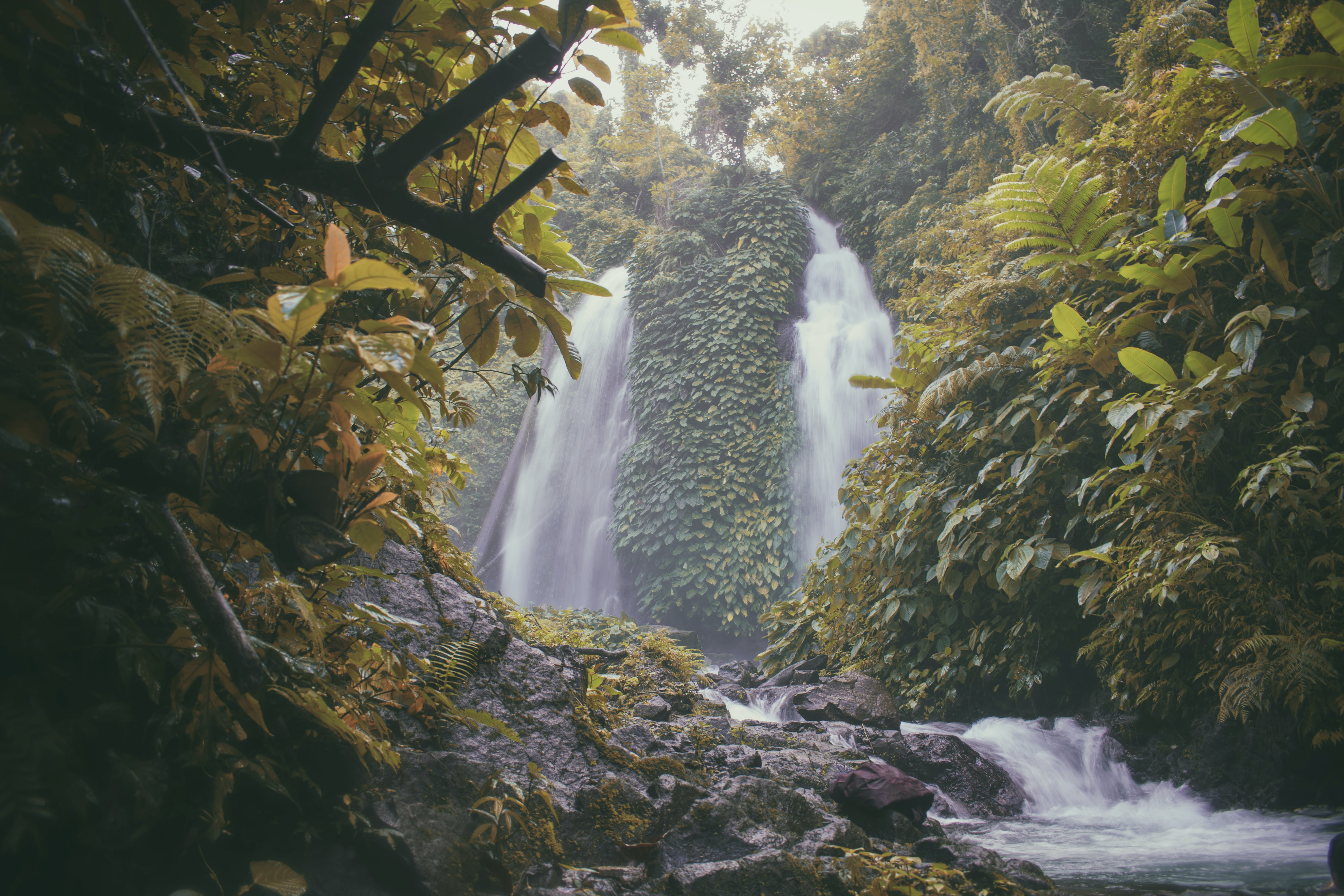Photo of Falls Surrounded With Green Trees