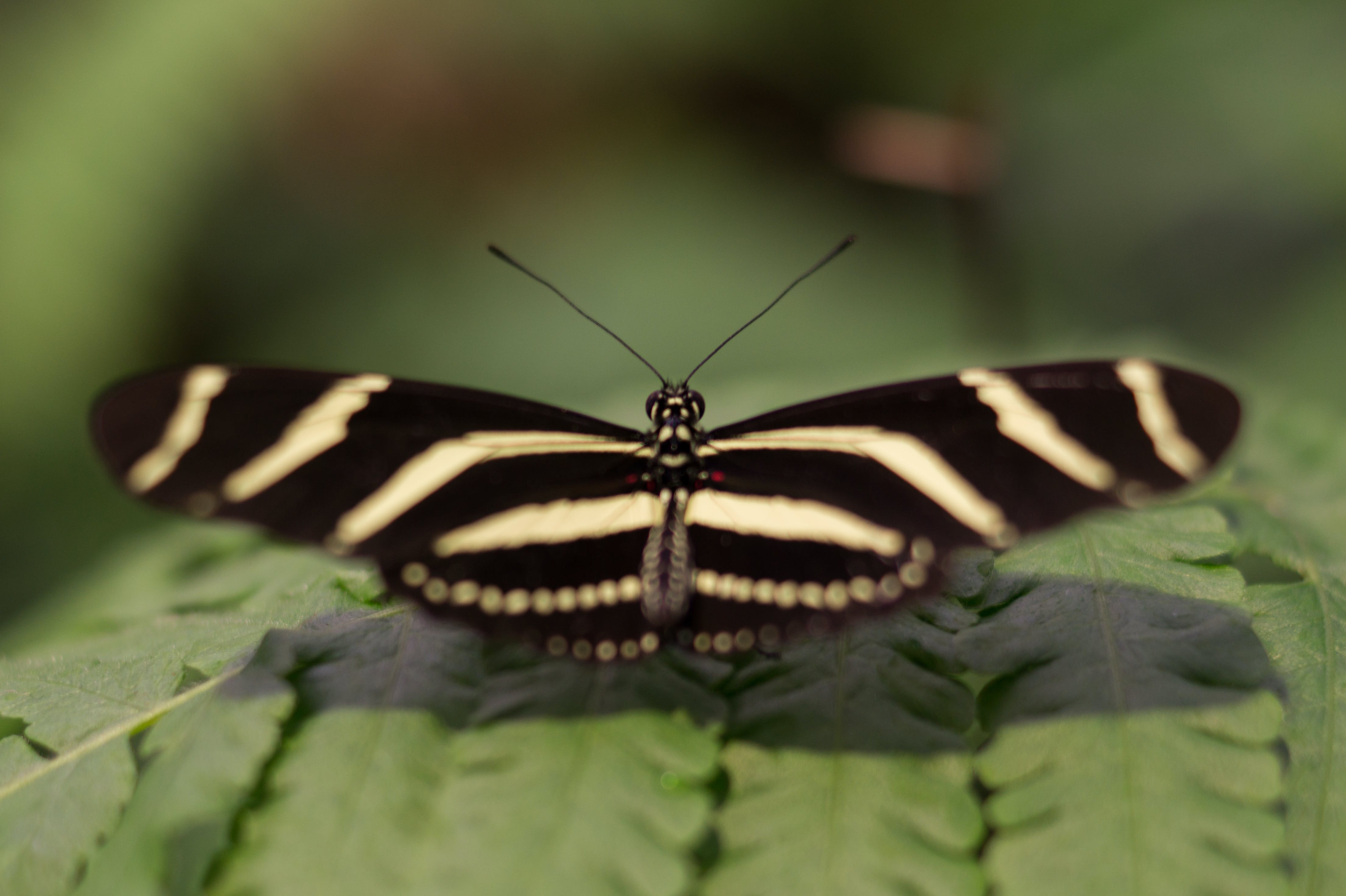 Closeup Photography of Black and White Butterfly Perching on Green Leaf