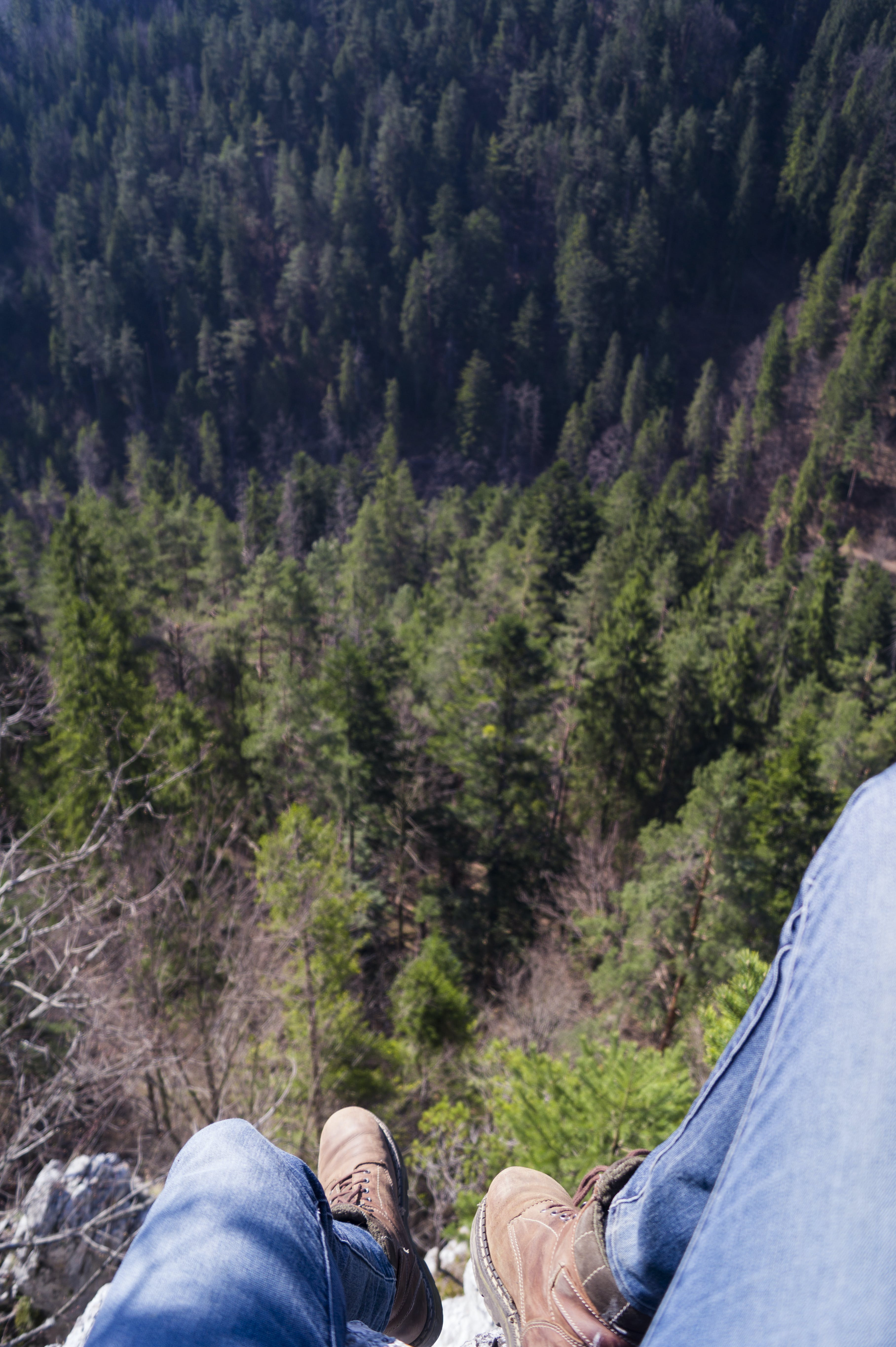 Person on High Ground With Tall Trees Below