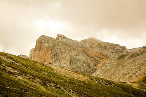 Ingyenes stockfotó a vadonba, domb, fű témában